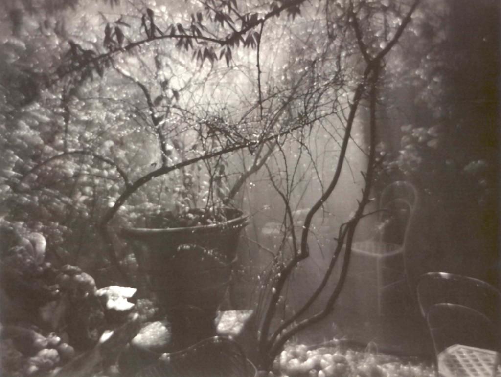 © Joseph Sudek, The Magic Garden during a Summer Shower, 1954-1959