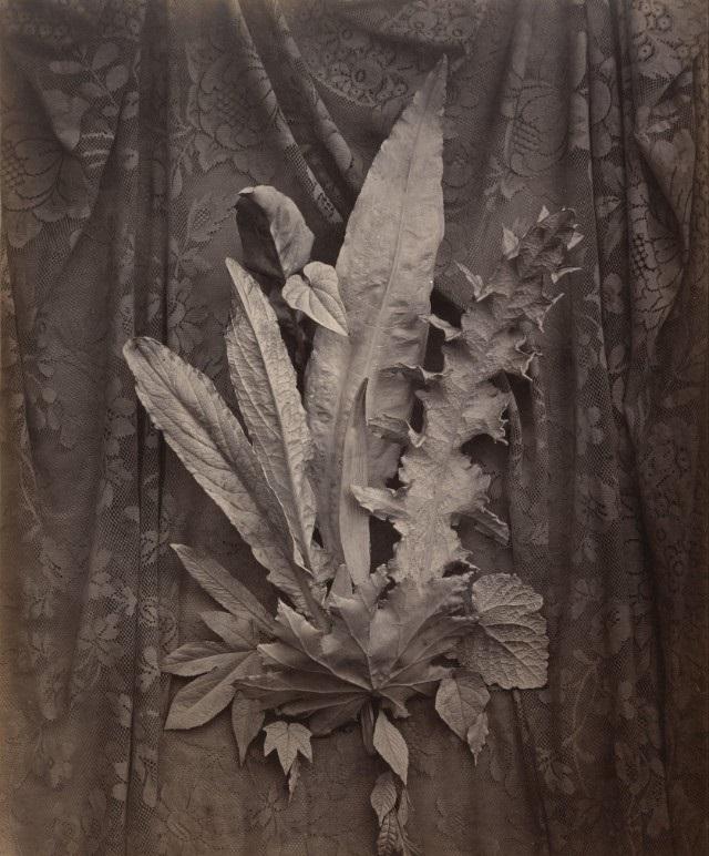 """Charles Aubry, """"Composizione con foglie di tabacco ed erba"""", 1864"""