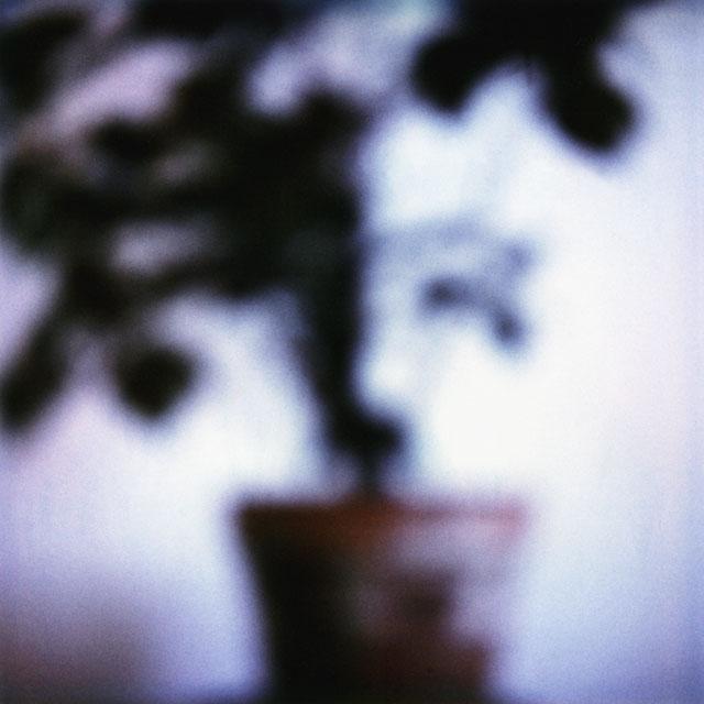 6_Ficus_1988